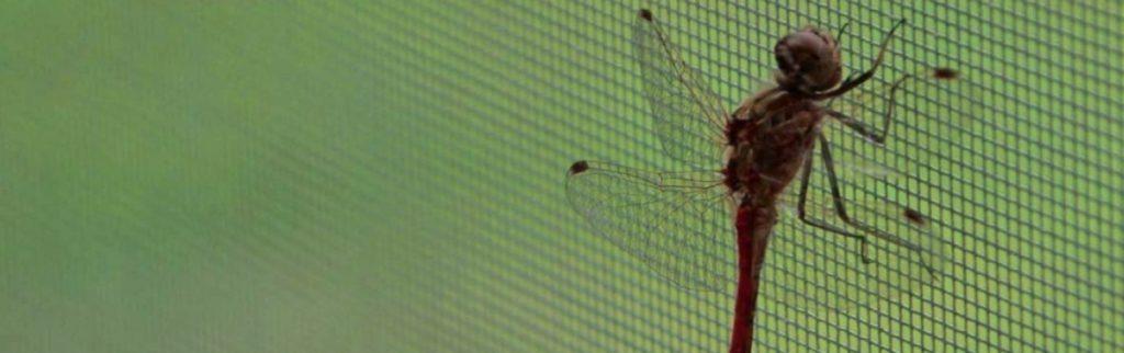 sítě do oken proti komárům a jinému hmyzu
